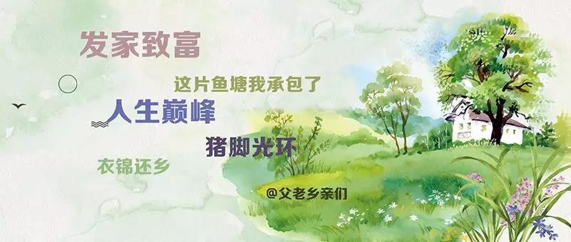 三皮说文旅:个人投资美丽乡村,没你想的那么美丽...