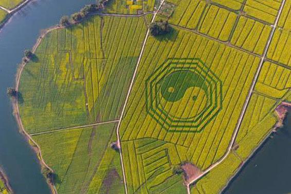 """三皮说文旅:花海之下有""""荆棘"""" 如何打造特色花海景区?"""